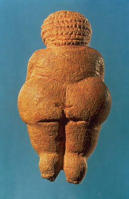Fertility Symbols Wall Art - Photograph - The Venus Of Willendorf, Rear View Of Female Figurine, Gravettian Culture, Upper Palaeolithic by .