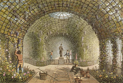 Wine Grapes Drawing - The Vinery by Humphry Repton