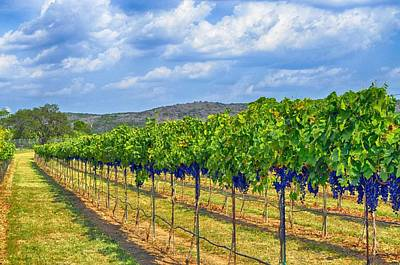 The Vineyard In Color Art Print by Kristina Deane