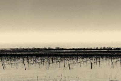 Photograph - The Vineyard In Winter by Jodie Marie Anne Richardson Traugott          aka jm-ART