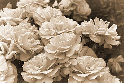 Photograph - The Vintage Rose Garden Sepia by Jennie Marie Schell