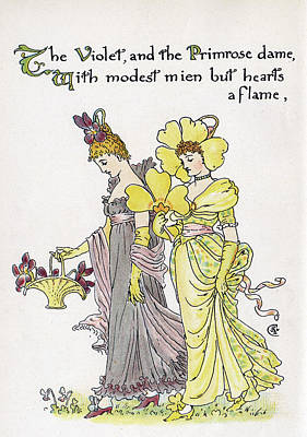 Primroses Drawing - The Violet And The Primrose Dame by Mary Evans Picture Library