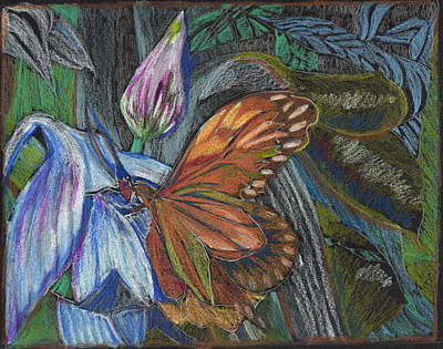 Orchid Drawing - The Visitor by Mindy Newman