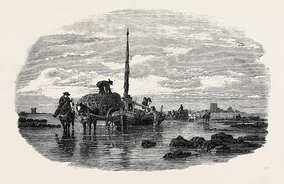 Seaweed Drawing - The Vraic Or Seaweed Harvest Guernsey Carting The Vraic by English School