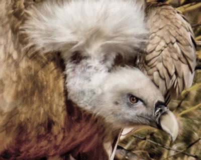 Vulture Digital Art - The Vulture by Ernie Echols
