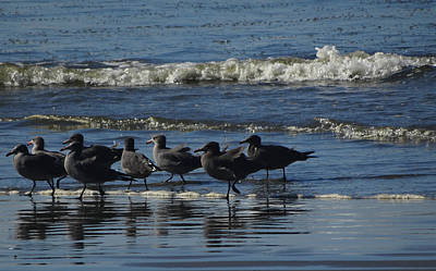 Photograph - The Waders by Jacqueline  DiAnne Wasson