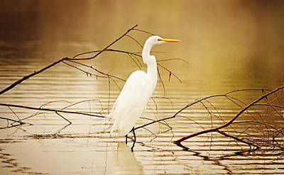 South Louisiana Photograph - The Waiting Game by Scott Pellegrin