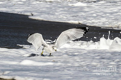 Seagull Photograph - The Walker On The Foam by Zina Stromberg