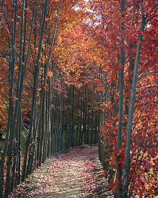 Photograph - The Wall Of Trees by Robert Culver
