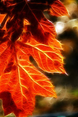 The Warmth Of Fall Art Print