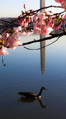 The Washington Monument Through The Cherry Blossoms Art Print by Debra Bowers