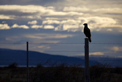Overseer Photograph - The Watcher by Daniel Zrno