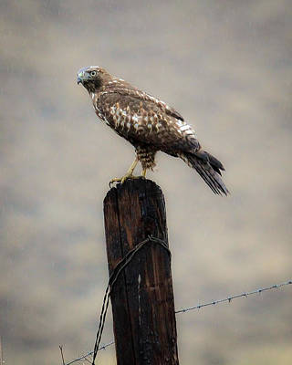 Photograph - The Watcher by Steve McKinzie