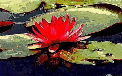 Photograph - The Water Lily Of Degas by Michael Hoard