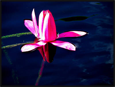 Photograph - The Water Lily... by Tim Fillingim
