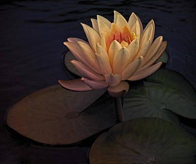 Digital Art - The Waterlily by Jill Balsam