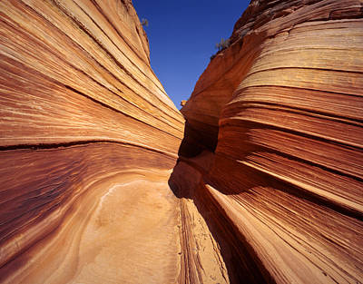 Photograph - The Wave Utah by Rich Franco