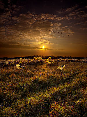 Goose Portrait Photograph - The Way South by Phil Koch