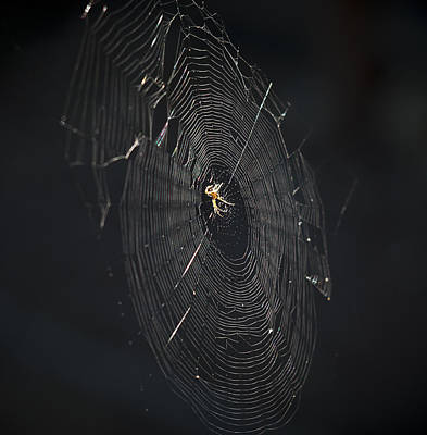 Photograph - The Web by Ron Roberts