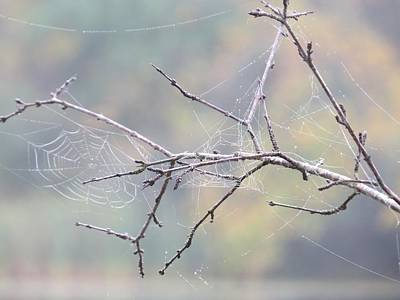 Art Print featuring the photograph The Web's Branch by Nikki McInnes