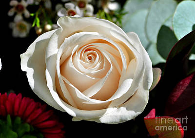 Photograph - The Wedding Rose by Kathy Baccari