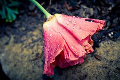 Raindrops Photograph - The Weight Of Rain by Priya Ghose