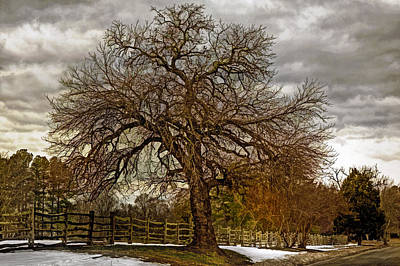 The Welcome Tree Art Print by Jerry Gammon