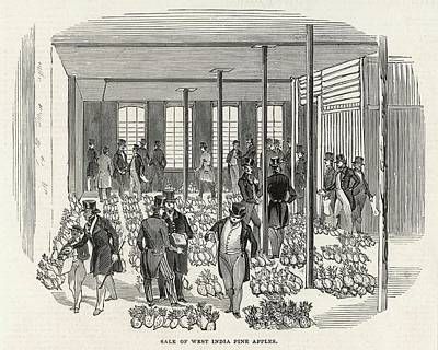Pineapple Drawing - The West India Company's Great  Sale by  Illustrated London News Ltd/Mar