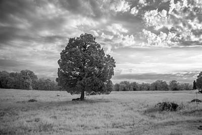 Photograph - The Wheatfield 8d00091 by Guy Whiteley