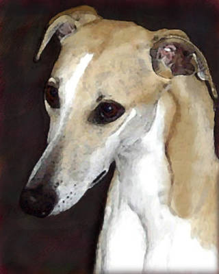 Whippet Digital Art - The Whippet by Maryle Malloy
