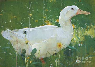 Fauna Painting - The White Drake by Pg Reproductions