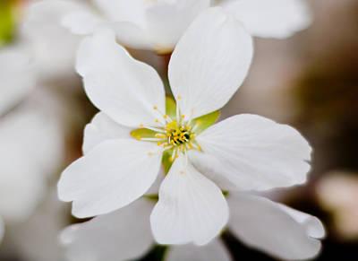 Parkersburg Wv Photograph - The White Flower by Jonny D