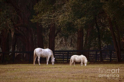 The White Horse Art Print by Mary Machare