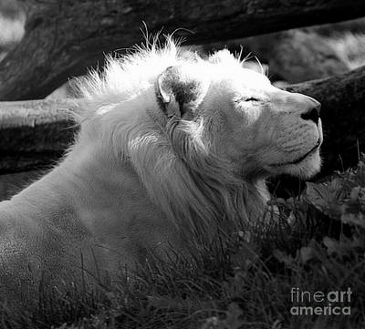 Photograph - The White King by Marcia Lee Jones