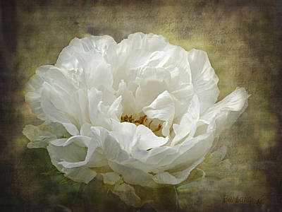 The White Peony Art Print