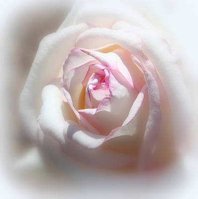 Photograph - The White Rose by Erin Tucker