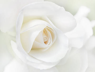Photograph - The White Rose Flower by Jennie Marie Schell