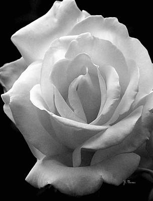 Art Print featuring the photograph The White Rose by James C Thomas