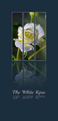 The White Rose Art Print by Sarah Christian