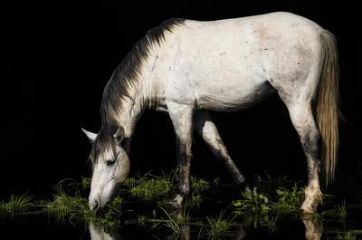White Stallion Photograph - The White Stallion  by Saija  Lehtonen