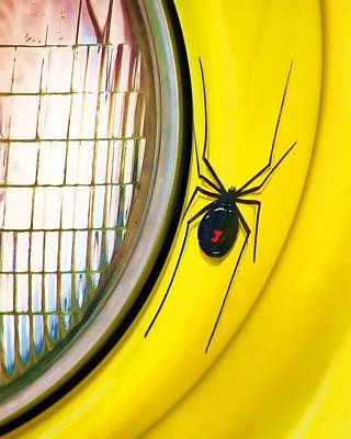 Black Widow Spider Photograph - The Widow And The Light by Nikolyn McDonald