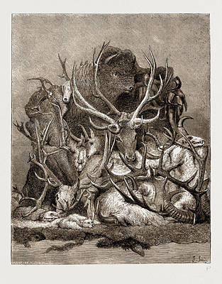 The Wild Game Of America, 1876 Art Print by Litz Collection