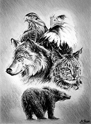 Animals Drawings - The Wildlife Collection by Andrew Read