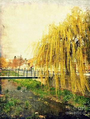 Photograph - The Willow by Ioanna Papanikolaou