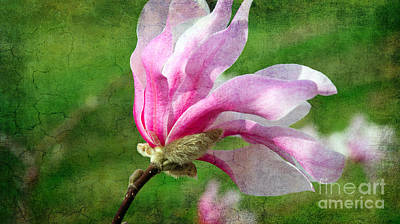 Windblown Mixed Media - The Windblown Pink Magnolia - Flora - Tree - Spring - Garden by Andee Design