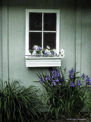 Photograph - The Window Box by Lucinda Walter