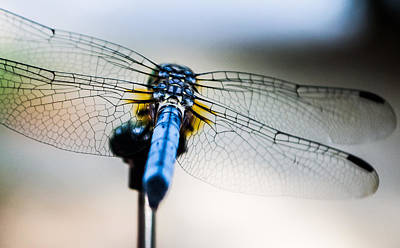 Dragonfly Macro Photograph - The Wings Of A Dragonfly by Shelby  Young
