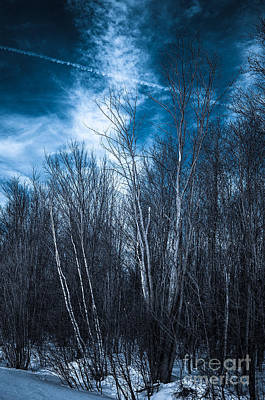 Photograph - The Winter Blues by Bianca Nadeau