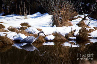 Reptiles - The Winter Buffet by Skip Willits