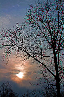 The Winter Skies Art Print by Rhonda Humphreys